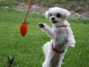犬猫へのベジタリアン食とビーガン食