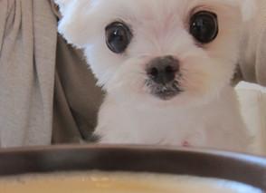 犬猫のオリゴ糖