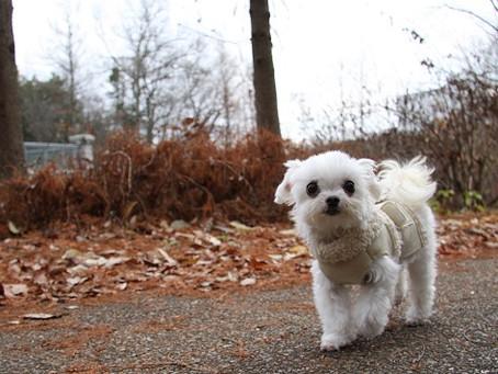 犬の腸リンパ管拡張症の食事管理