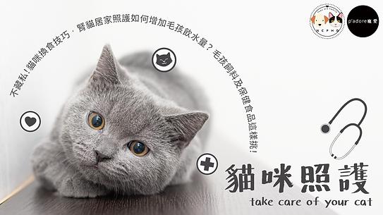 貓咪照護.png