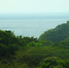 forest-ocean.jpg