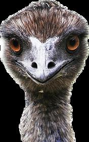 EMUUUUU.png