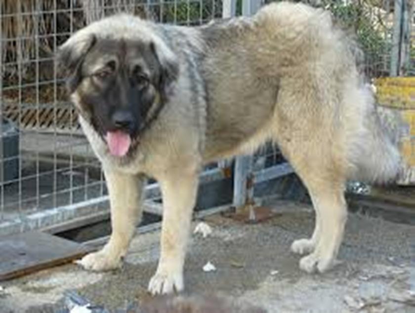 סול - טיפול הומאופתי לכלב