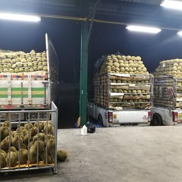 durian loading.jpg
