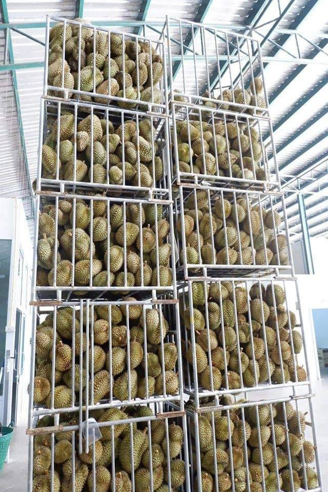 durian whole.jpg
