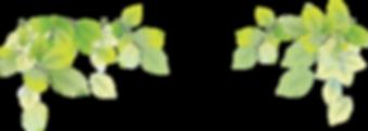 transparent-png-leaf-image-38636-green-l