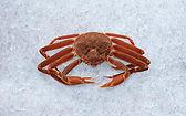 snow-crab.jpg