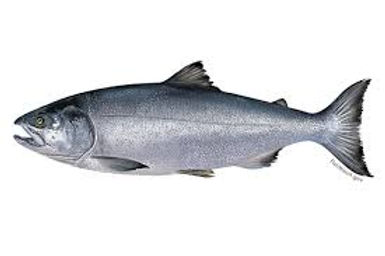 Chum-salmon.jfif