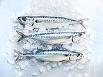 mackerel new.jpg