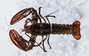 ns-lobster.jpg