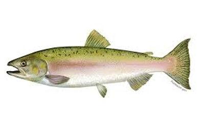pink salmon.jfif