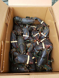 lobster box (1).jpg