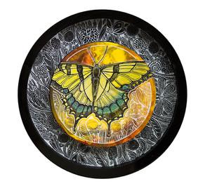 Swallowtail Song