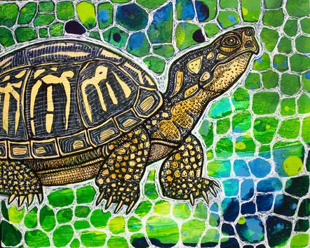 Eastern Box Turtle