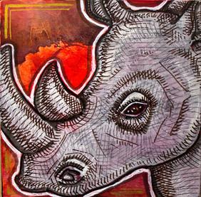Sunset Rhino