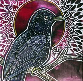 My Darling Starling