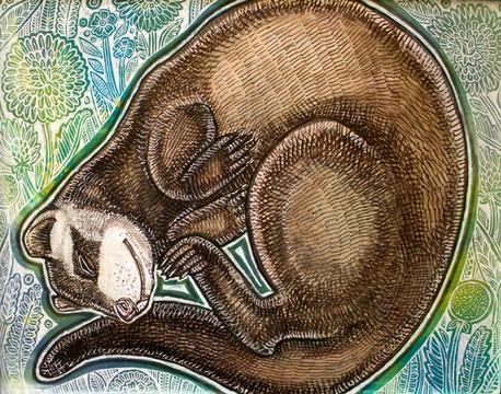 Dreaming Ferret