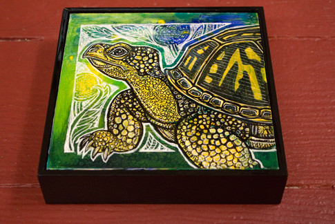 Spring Turtle