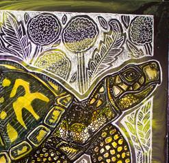 Box Turtle and Dandelions