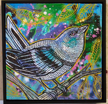 cerulean-warbler-7.jpg