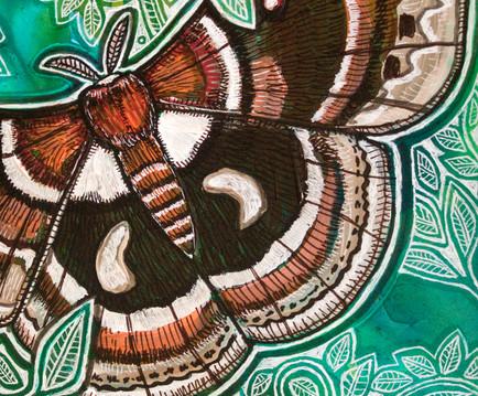 Cecropria Moth