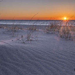 beach horizon sunsire dunes.jpg