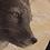 Thumbnail: Arctic Fox