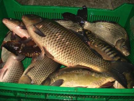 Акция для покупки рыбы!