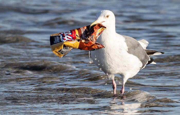 marine-bird-and-chips-pack.jpg