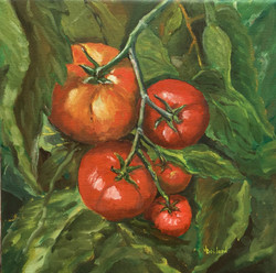 Les tomates mures