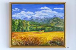 Champs de blé à Maracon