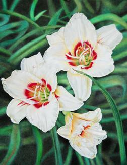 White Lily Trio