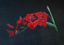 Red Gladiolas