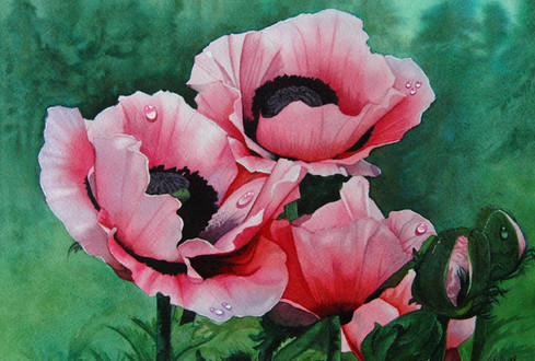 Pretty in Pink Poppies