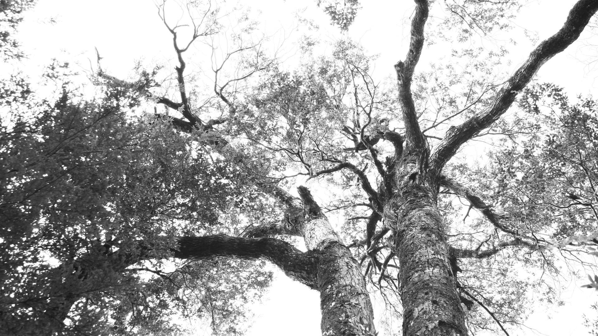 Fotografía blanco y negro.jpg