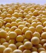 Soja grão a granel ou ensacada
