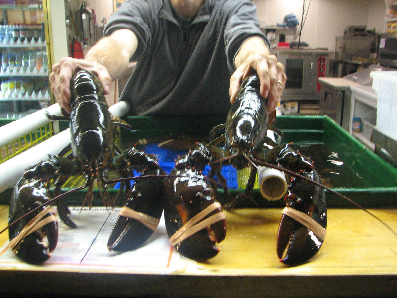 BH lobsters 391kb