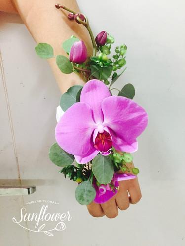 Pulsos_de_orquídea_phanelopsis,_papalo_m