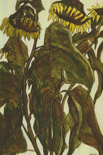 dode zonnebloemen.jpg