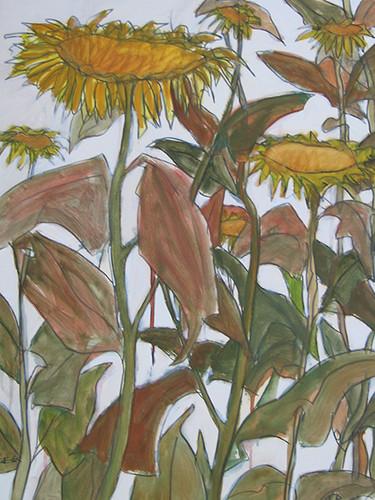 zonnebloemen.jpg