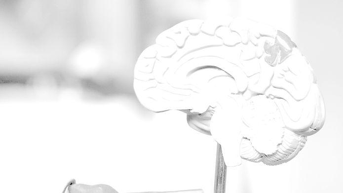 HjerneBG2.jpg