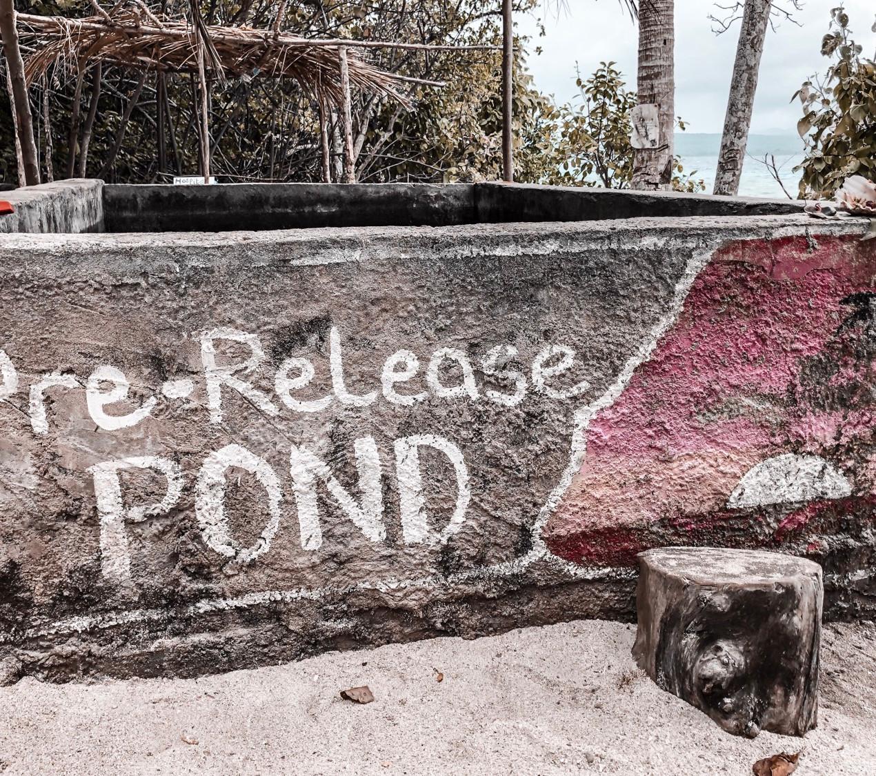 Pre-release Pond - Hawksbill Turtle Sanctuary