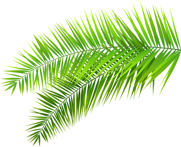 leafs and palms (3).png