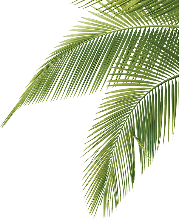 leafs and palms (4).png