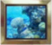 Poisson bleu.jpg