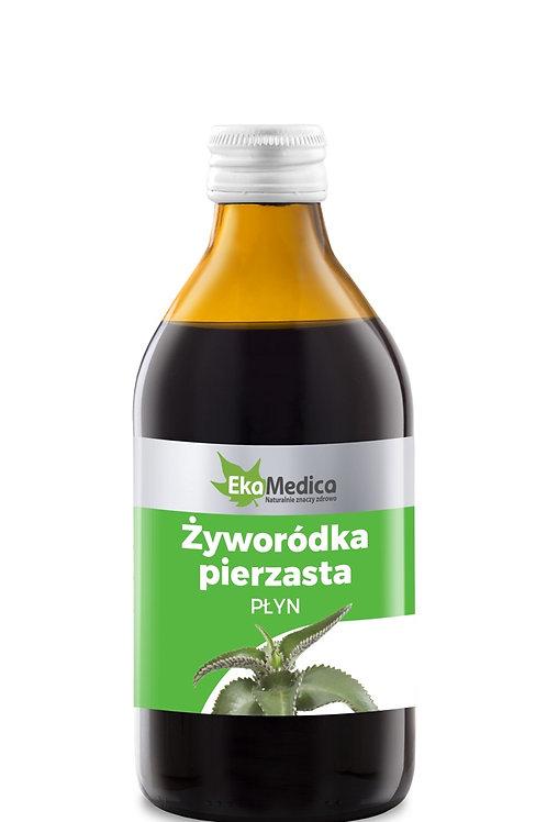 Płyn Żyworódka Pierzasta 250 ml.