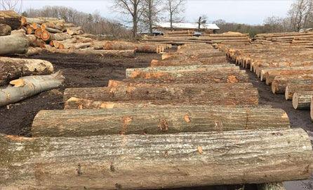 lumber-ep-2221.jpg