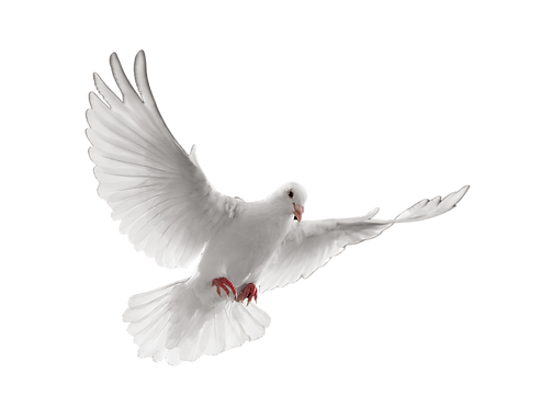 Dove with black background removed.png