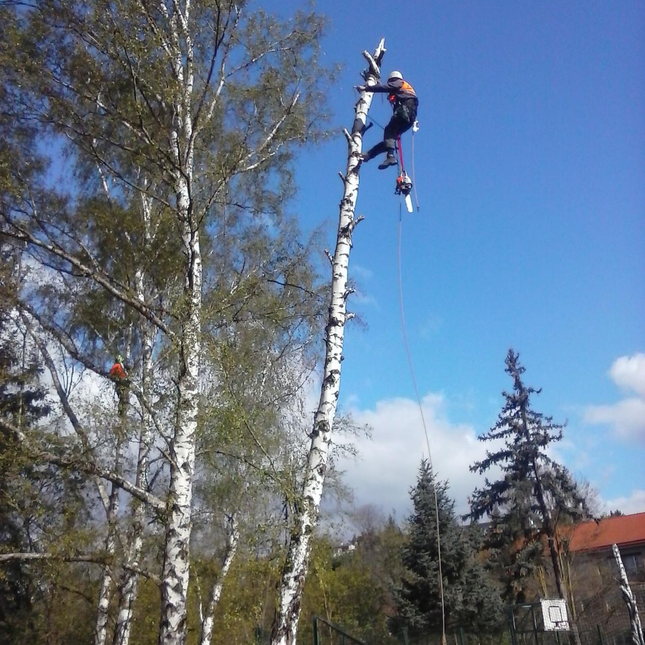 arboristicke_prace_cermak_a013