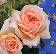 Garden_of_Roses_1.jpg